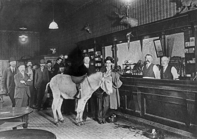 tavern-unidentified-donkey-inside-web