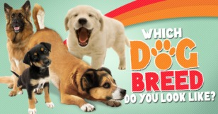 which_dog_breed_do_you_look_like_featured_large